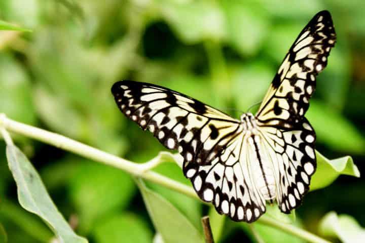 mariposas el cielo tamaulipas Paul Horner