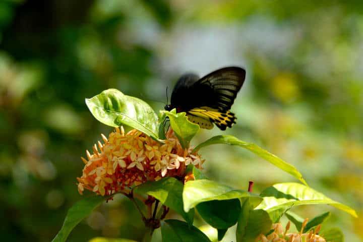 mariposas el cielo tamaulipas foto Duncan R