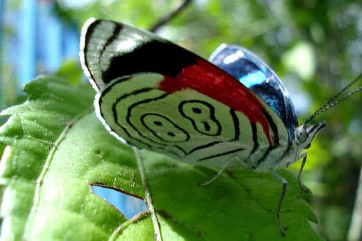 mariposas el cielo tamaulipas foto Stelene