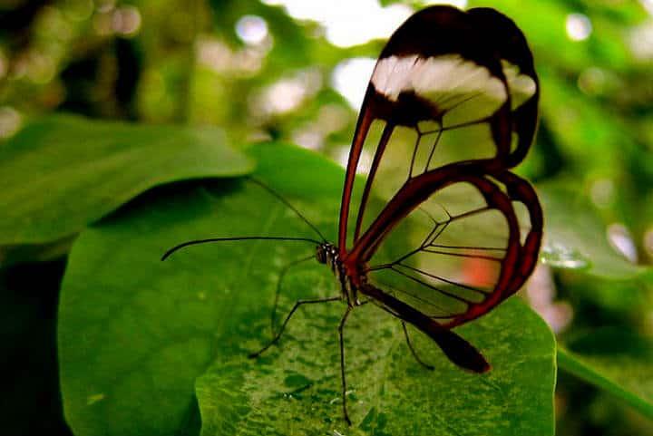 mariposas el cielo tamaulipas trasnparente