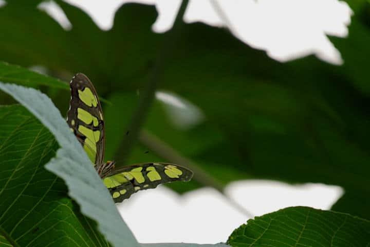 mariposas el cielo tamaulipas verde de Armando Aguayo R