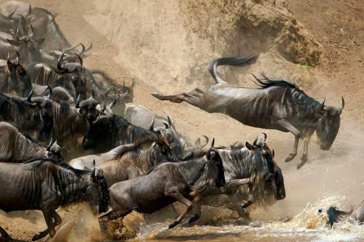 migracion-serengeti-2