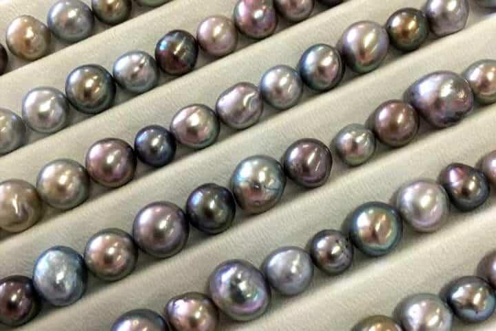 perlas-del-mar-de-cortez-05