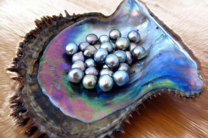 perlas-del-mar-de-cortez-10