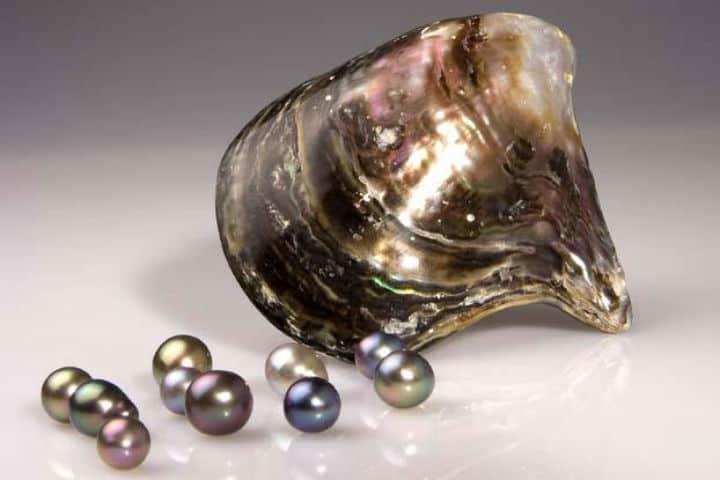 perlas-del-mar-de-cortez-14