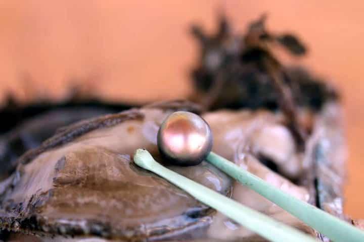 perlas-del-mar-de-cortez-29