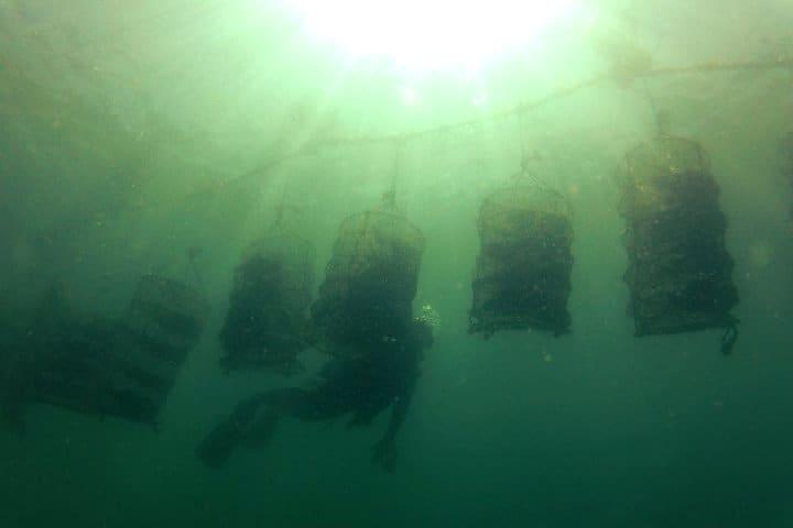 perlas-del-mar-de-cortez-32