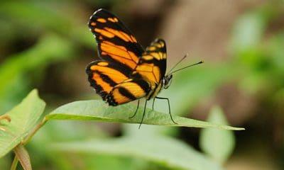 portada mariposas el cielo tamaulipas a rallas