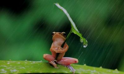 rana-lluvia-lugares para disfrutar