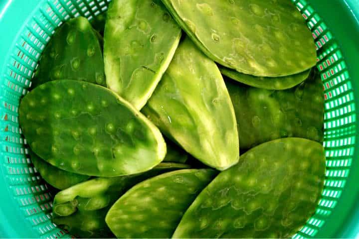 terminos gastronomia mexicana 14