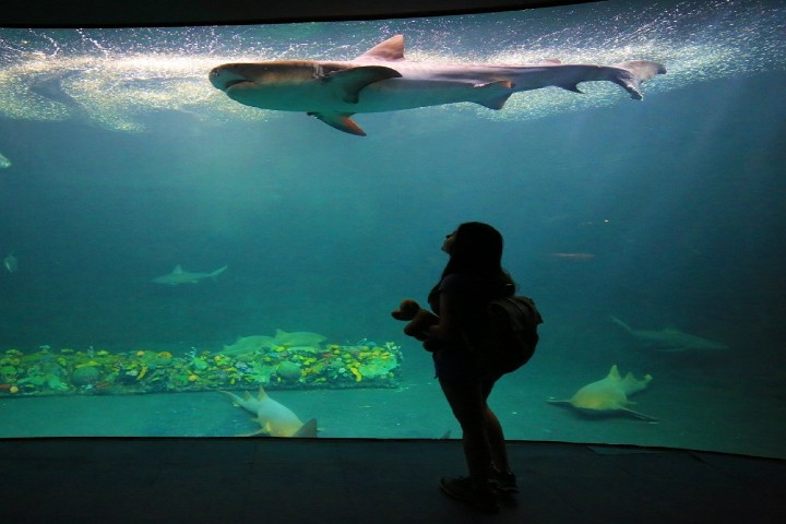 sorprendente-acuario-de-veracruz-foto-mexico-ruta-magica-3