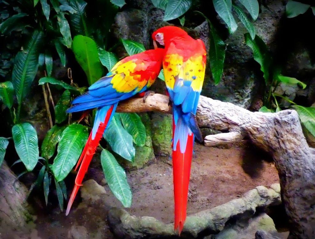 selva-los-tuxtlas-acuario-veracruz-foto-vero-travel-8