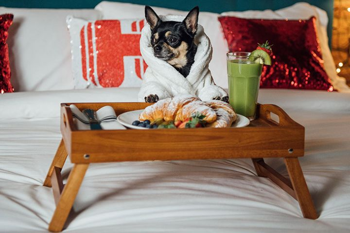 Bleu & Blanc Foto: hoteles petfriendly en México