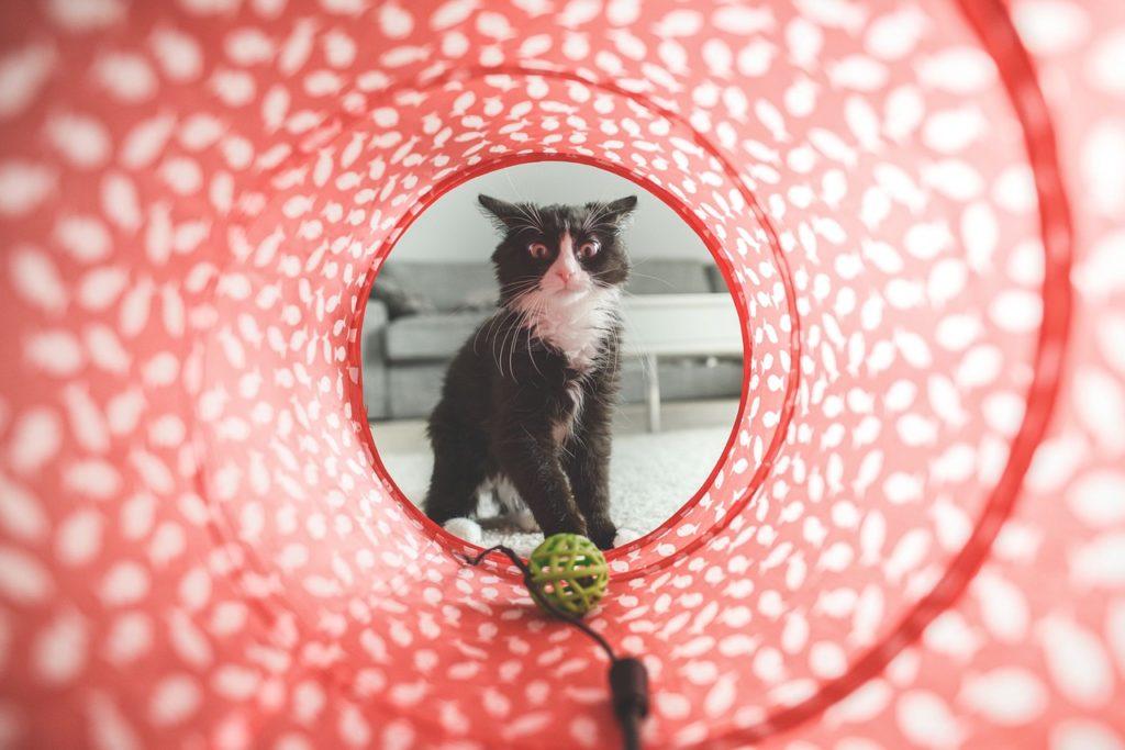 Gato jugando Foto: tookapic