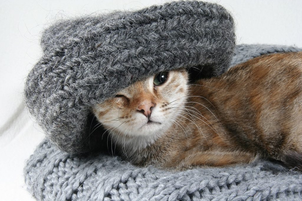 Gato y tejido Foto: auenlaben