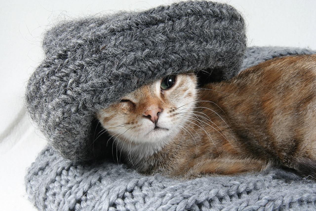 Gato y tejido Foto. auenlaben 4