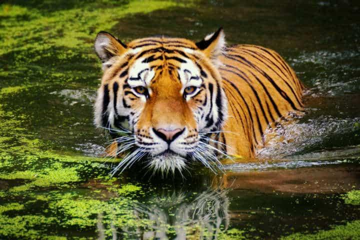 Imagina el impacto de ver de cerca a estas imponentes criaturas Foto Ranae Smith