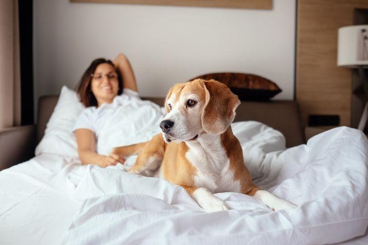 Marquette Management Foto: hoteles petfriendly en México