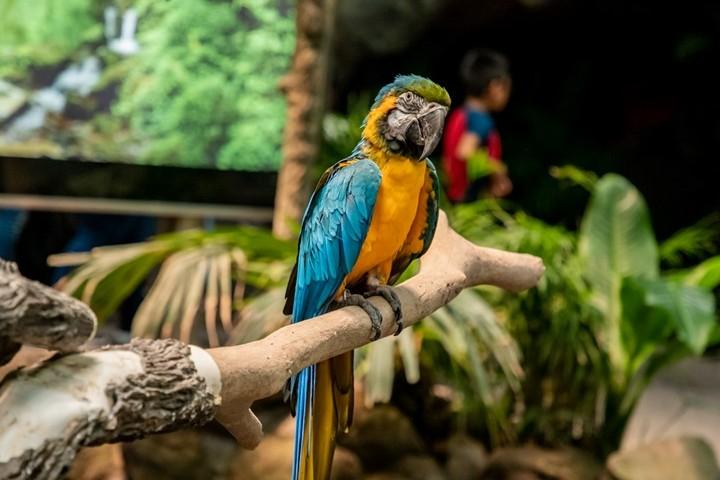 Selva Tuxtla Foto Acuario de Veracruz FB.