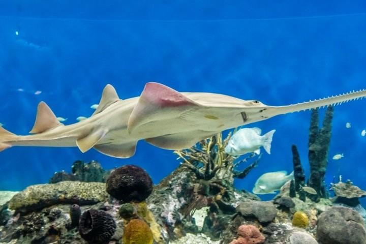 Tiburon. Foto Acuario de Veracruz.