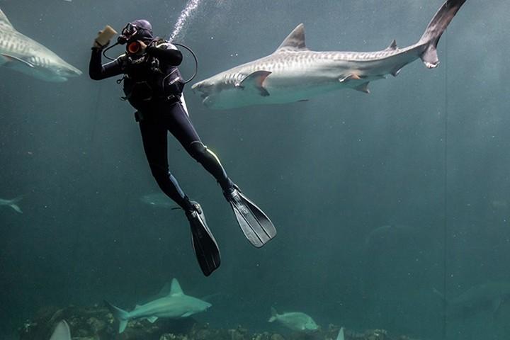 Tiburones Foto Acuario de Veracruz FB.