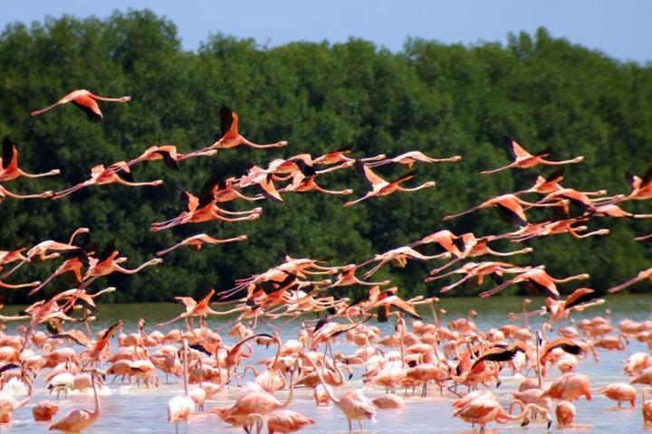 especie-que-no-se-pierde-de-vista-flamencos-rosados-de-yucatan-foto-sitquije-2