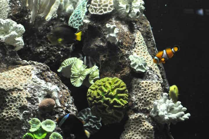 acuario-de-veracruz-10