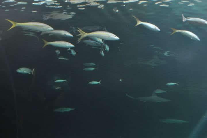 acuario-de-veracruz-11