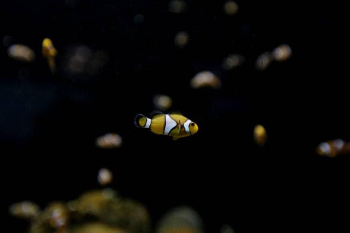 acuario-de-veracruz-23
