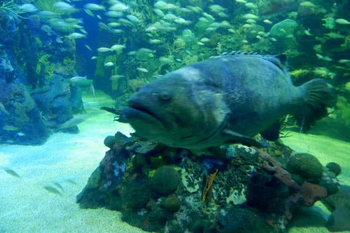 acuario-de-veracruz-26