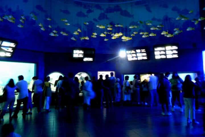 acuario-de-veracruz-29