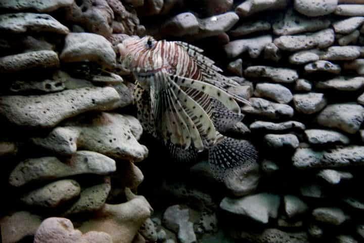 acuario-de-veracruz-30