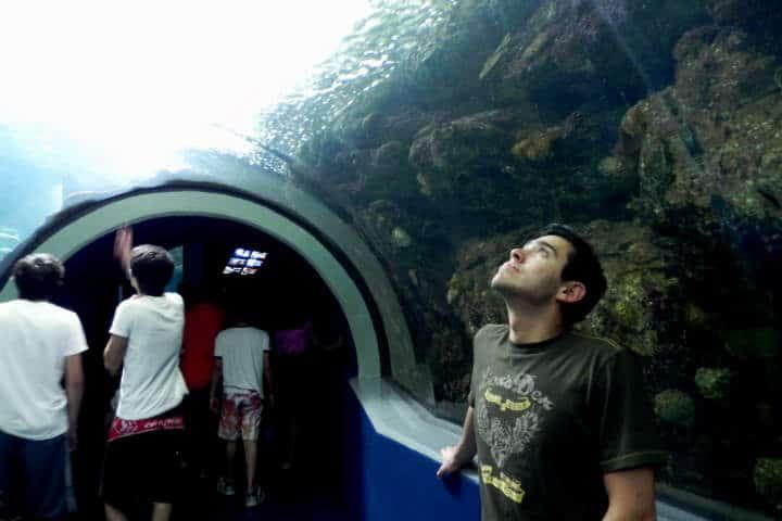 acuario-de-veracruz-31
