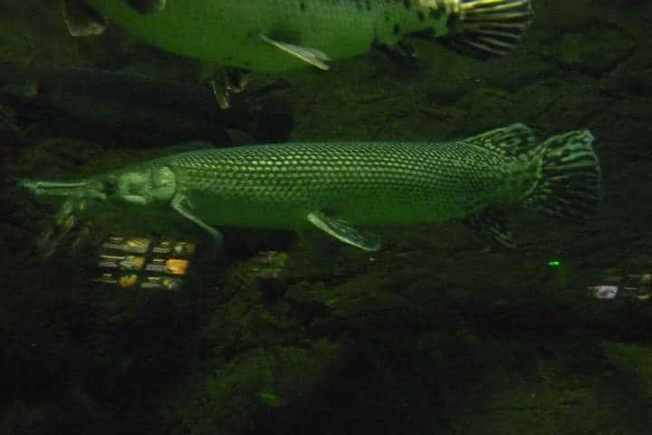 acuario-de-veracruz-6