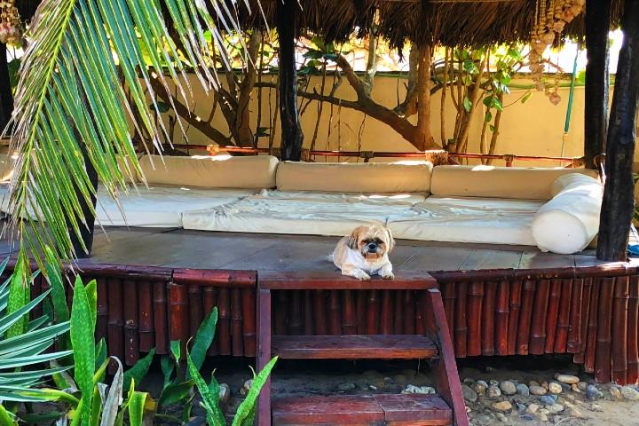 El-mejor-hotel-para-la-relajación-5-hoteles-petfriendly-en-mexico-foto-hotel-bambuddha-2
