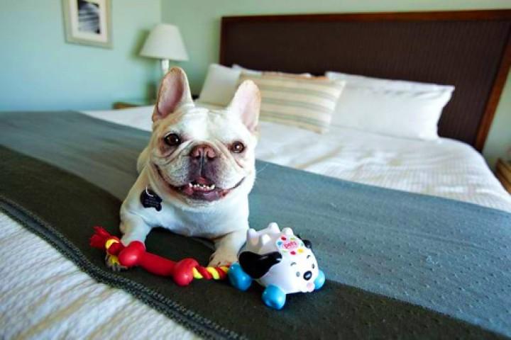 Viaja-con-tu-mejor-amigo-5-hoteles-petfriendly-en-mexico-foto-vida-y-estilo-2