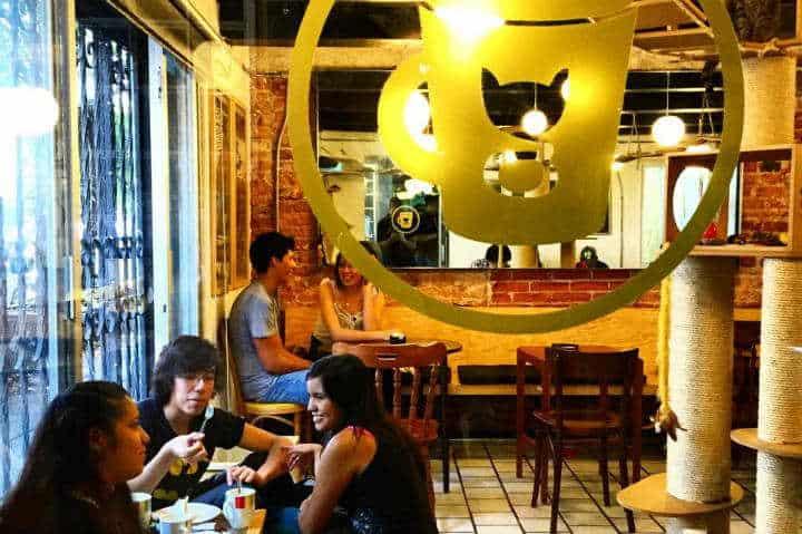 gateria-cat-cafe-mexico-2