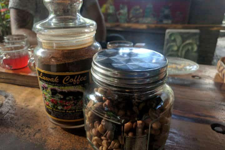 kopi-luwak-indonesia-11