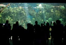 acuario-de-veracruz-3