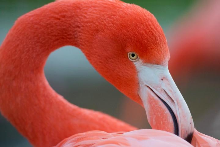 majestuosos-con-su-pelaje-rosado-foto-desde-el-balcon-4