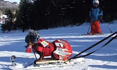 skiis-for-dogs