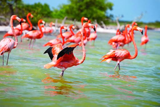 conservación-flamencos-rosados-foto-estado-de-yucatan-1