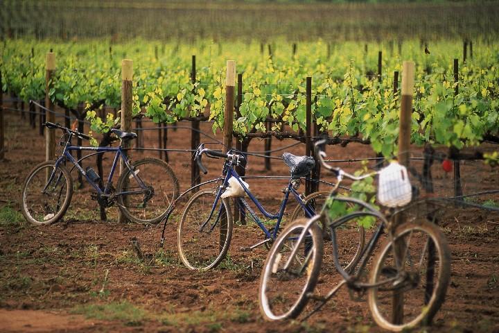 Recorrido-en-bici-por-la-ruta-del-vino-foto-posta-5