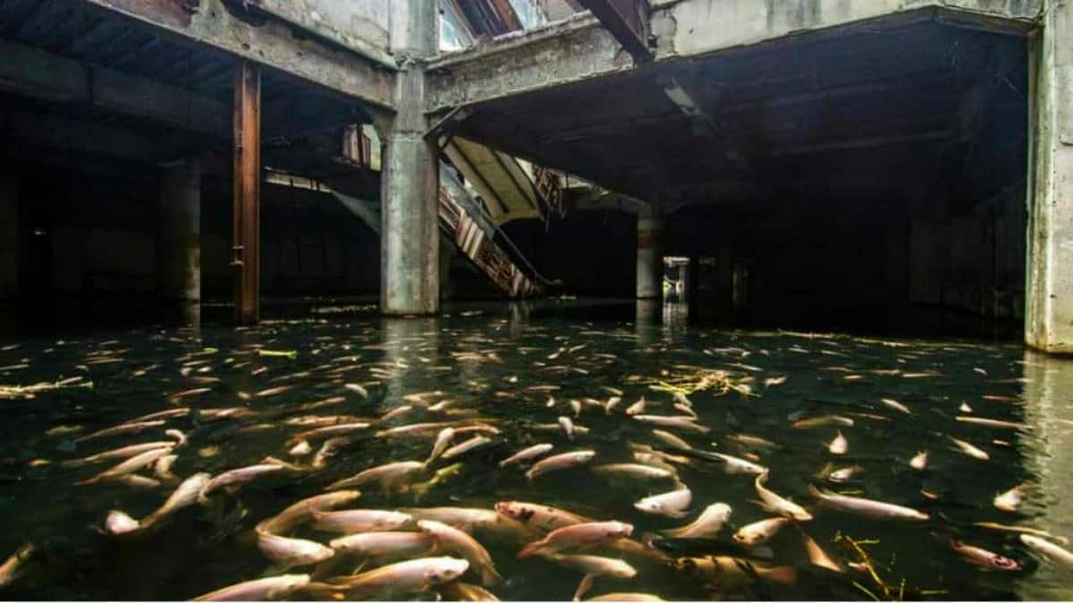 Acuario abandonado en Bangkok Foto Archivo