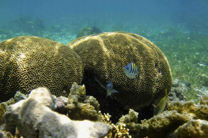 cabo-catoche-3-arrecife