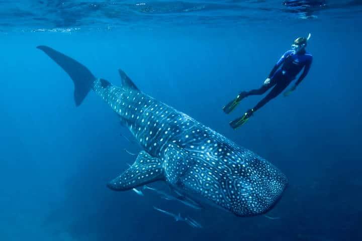 cabo-catoche-4-tiburon-ballena