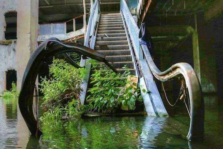Centro comercial inundado se convierte en acuario abandonado en Bangkok Foto Pinterest
