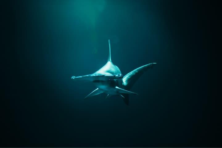 Checa el encuentro tan cercano que tuvo este hombre con un tiburón martillo Foto Jonas Allert