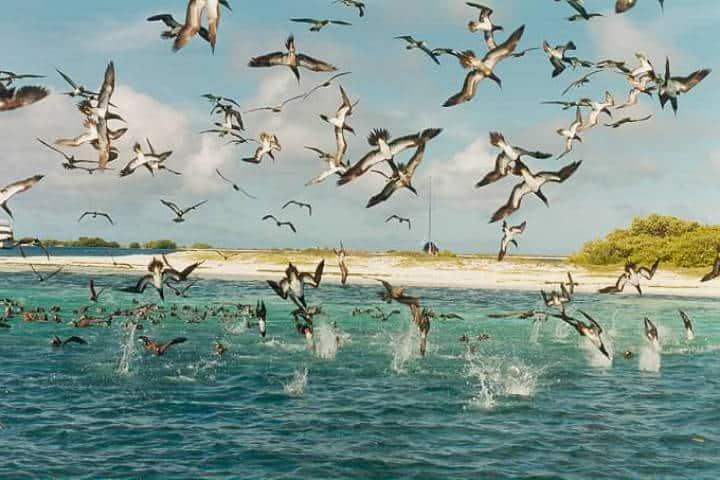contoy-isla-de-las-aves-1