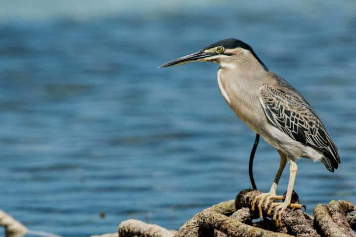 contoy-isla-de-las-aves-10